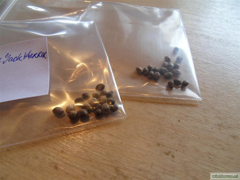 HolyDiver seeds AI JH NLX -4-.jpg