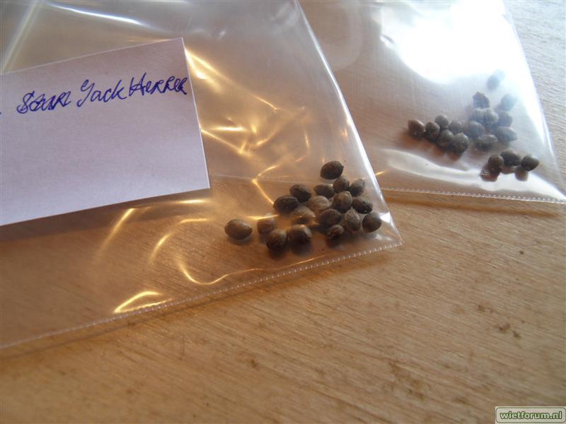 HolyDiver seeds AI JH NLX -3-.jpg