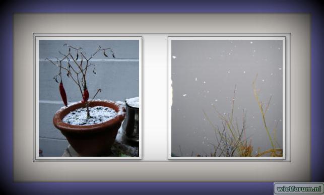 gallery_6979_9442_17549.jpg