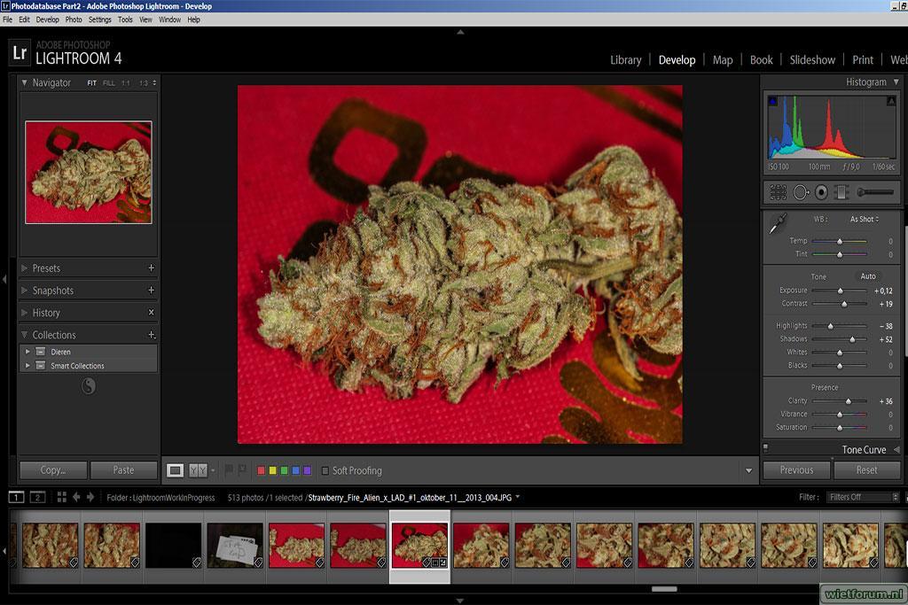 gallery_20039_12611_120512.jpg