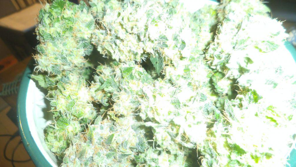 gallery_44142_19647_3761703.jpg