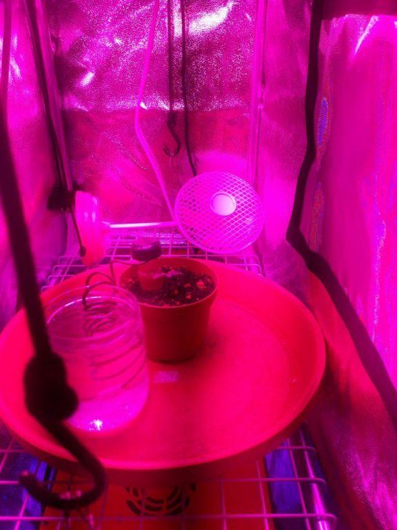 gallery_48047_19681_3141839.jpg