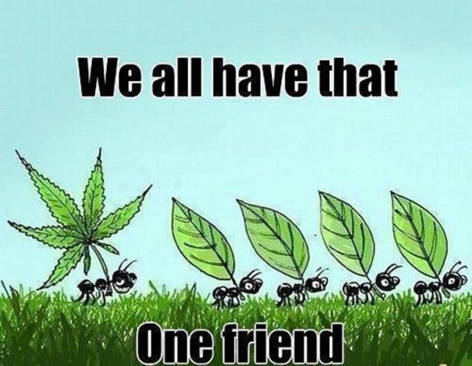 Funny-Ants-Walking-With-Weed-Leaf.jpg