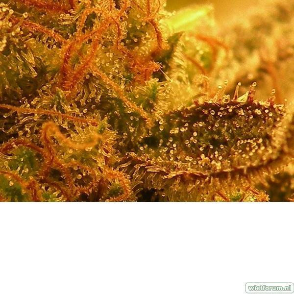 Plant 4 Macro 2.jpeg