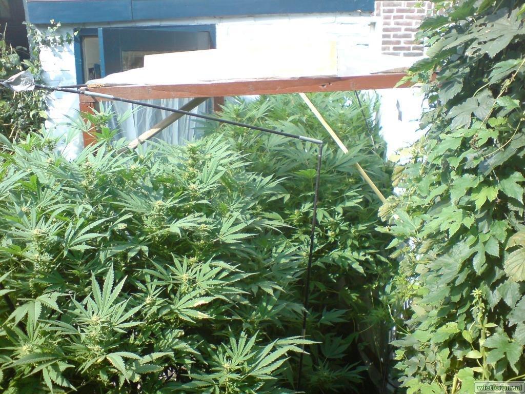 planten in de kas