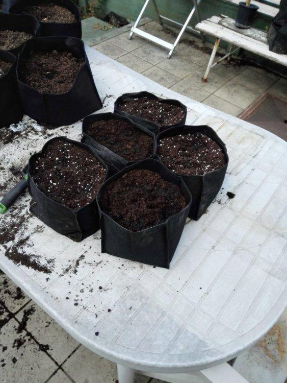 plantjensgeplantnieuweairpotten.jpeg
