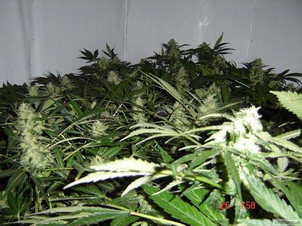 plantjes 25-06 026.jpg