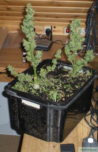 plantjes gesnoeid.jpg