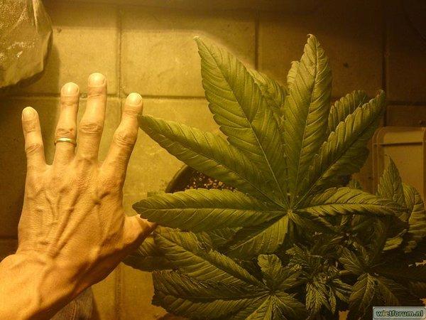 bladhand.jpg