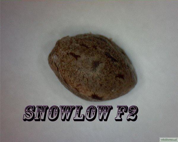 Snowlow F2.jpg