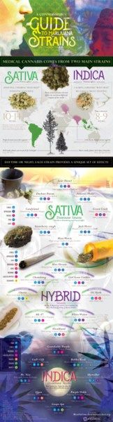 marijuana strains For medical Use 583dbeb1358ae