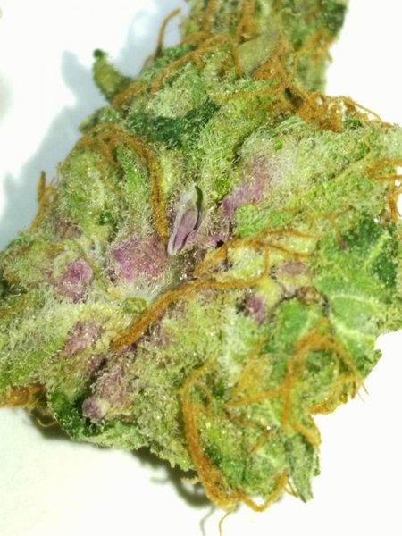 rppxchem purpleheart
