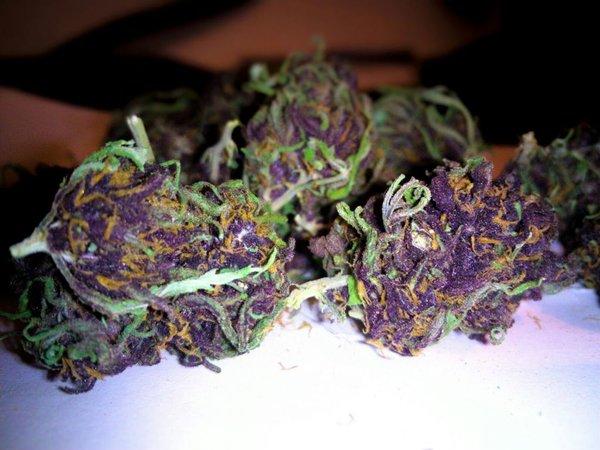 Purple #1 Resultaat 2016