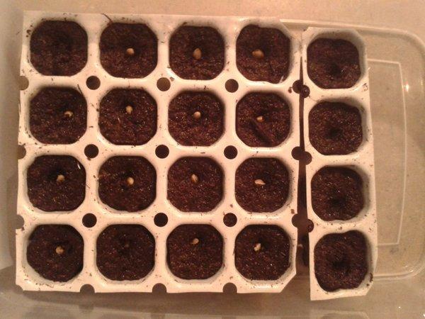 16 zaden gezaaid