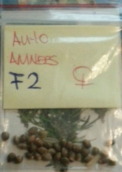 Auto amnesia haze zaadjes