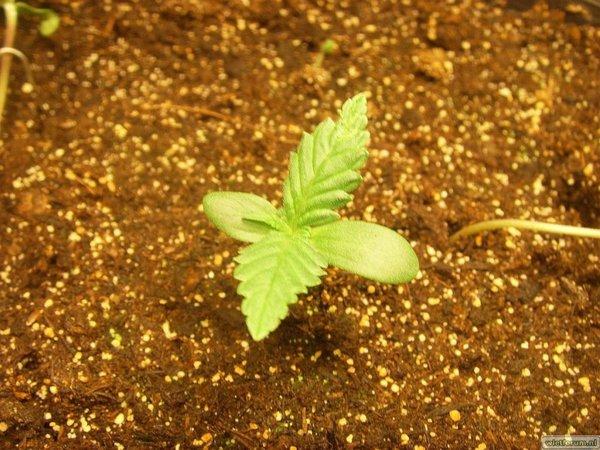Tijdelijk Hokje - 2011-02-03 - LR - Plantje 3.JPG