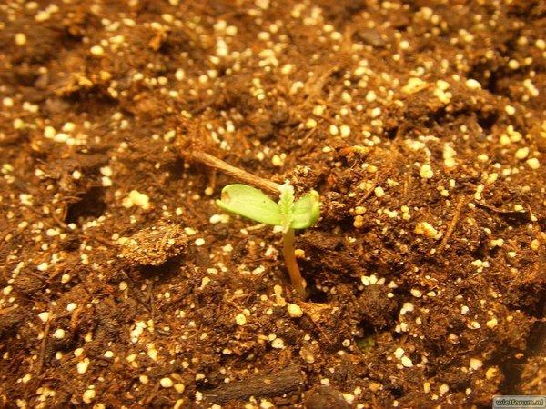 Tijdelijk Hokje - 2011-02-02 - LR 1 - Plantje 4 - 1.JPG