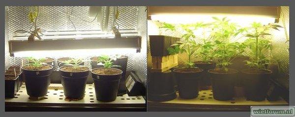 LR#2 - 8 dagen onder bloeispectrum
