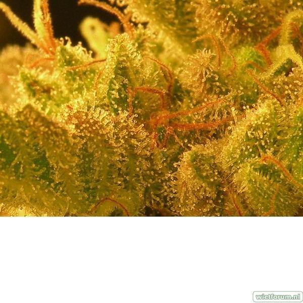 Plant 2 Macro 1.jpeg