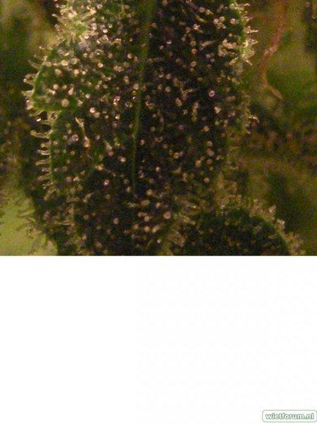 Plant 3 Macro 1.jpeg