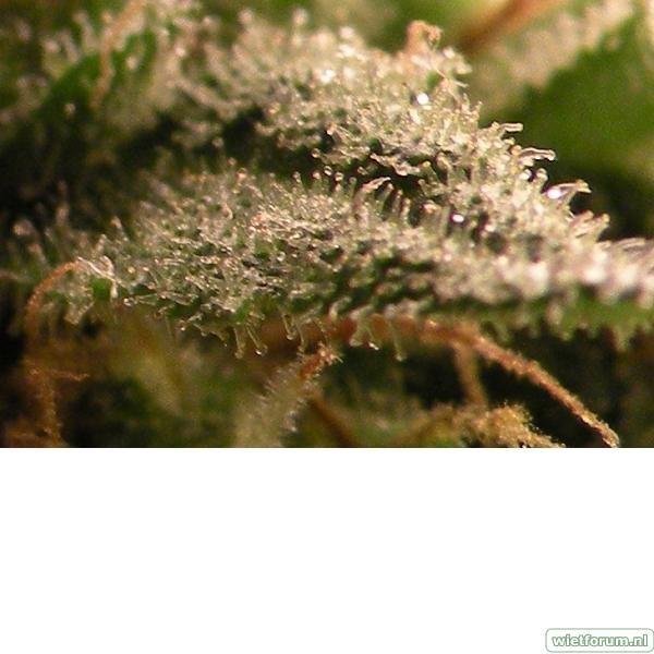 Plant 1 Macro 2.jpeg
