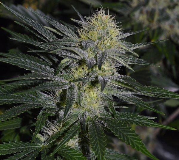 femaleflower1c