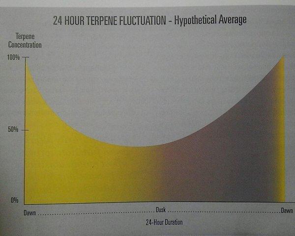 TerpineFlux