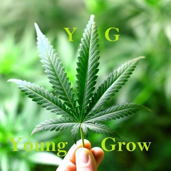 Young Grow green