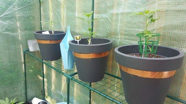 Overgepot in de grote potten
