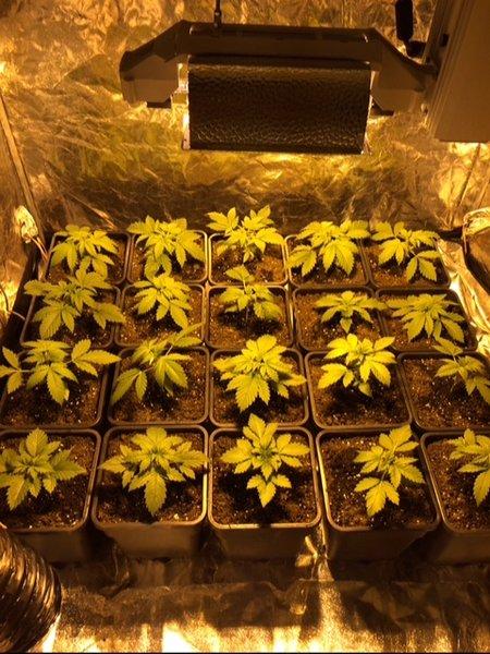 Dag 17 groei.