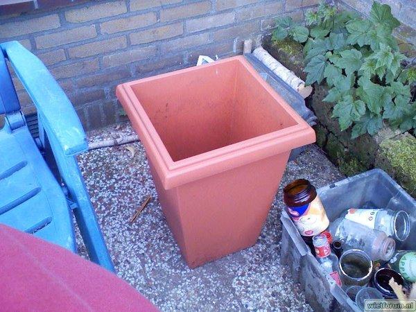 NLX Zaailing in de tuin (mex. sativa RIP)
