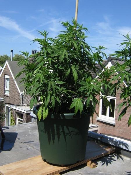 06_07_14 plant 3 portret.jpg