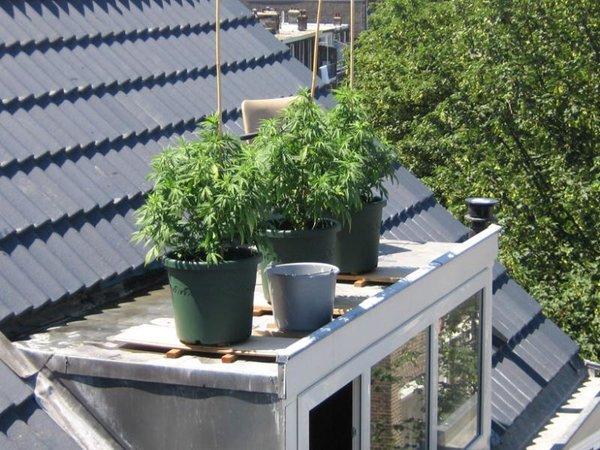 06_07_14 gezellig op het dak.jpg