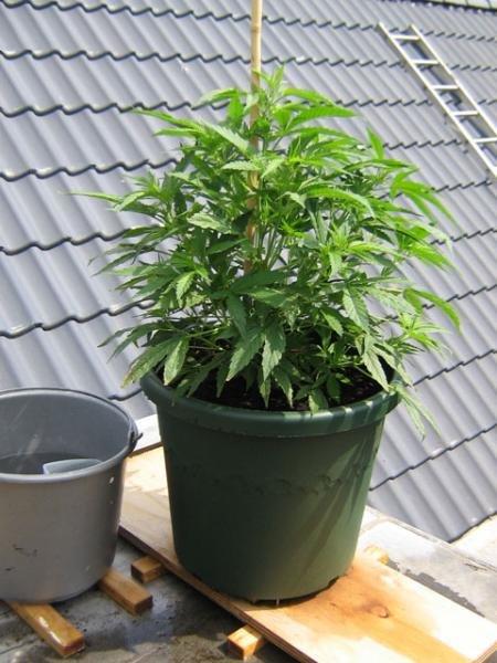 plant1 portret.jpg