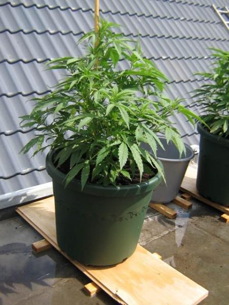 plant2 portret.jpg