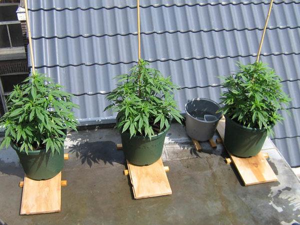 overzicht plantjes.jpg