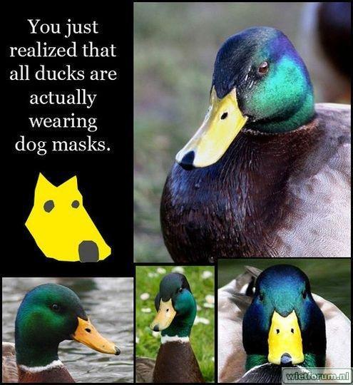 66-ducks-with-dog-masks.jpg