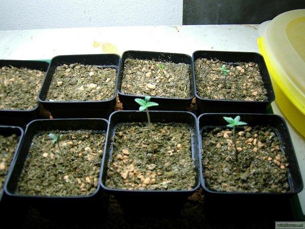 plantjes 002.jpg