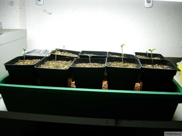 plantjes 001.jpg
