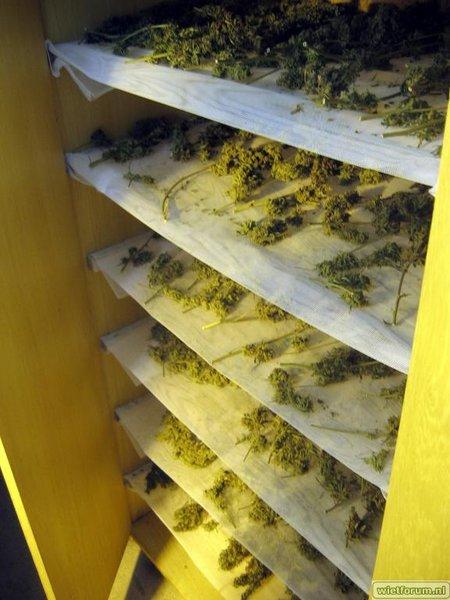 Grow Aptus Amn einde kweek -60-.jpg