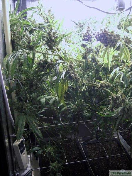 Grow Aptus Amn einde kweek -49-.jpg