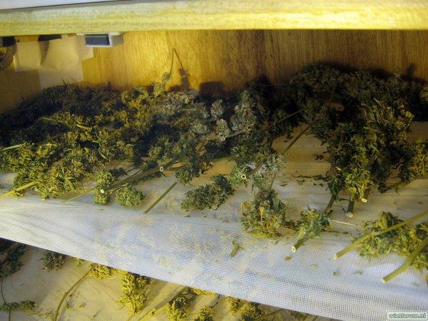 Grow Aptus Amn einde kweek -61-.jpg