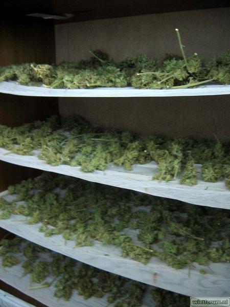 Grow Aptus Amn einde kweek -63-.jpg