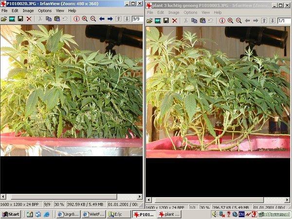 grow2plant3dieven.jpg