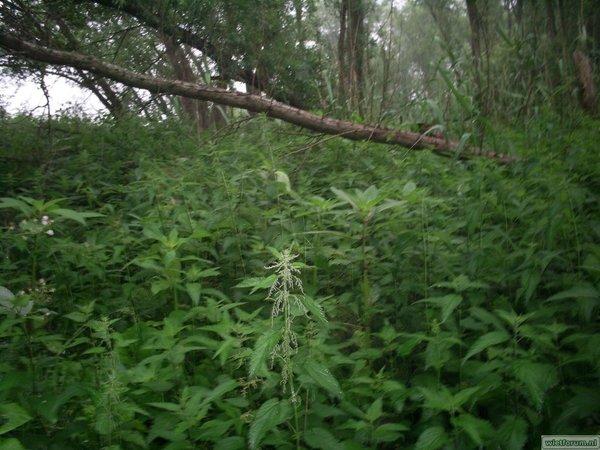 de bush