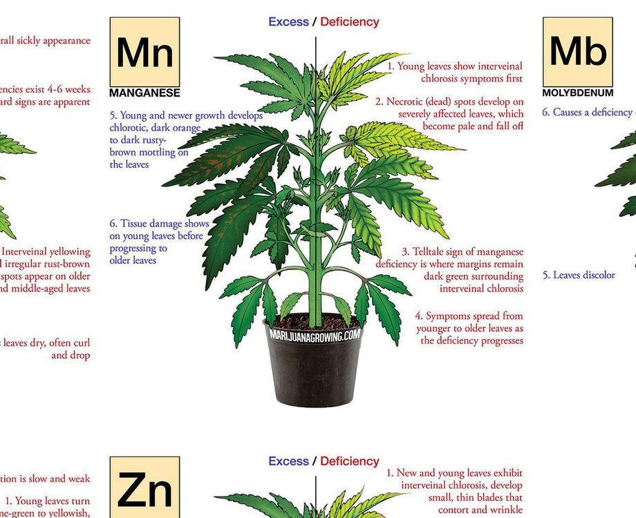 marijuana-deficiency-chart-jorge-cervantes.thumb.jpg.43e1bbec1925b6fc1e203a4807c496d5.jpg