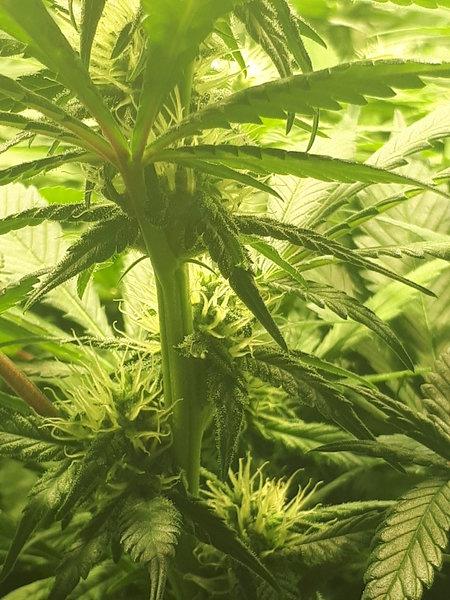 bloeidag 28 Sisi pot 3 (2).jpg