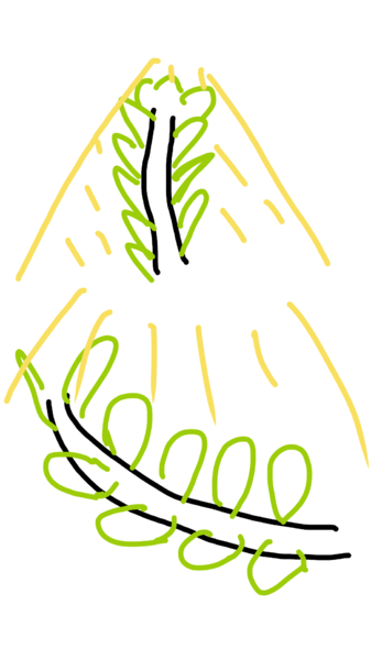 sketch-1543740791931.png