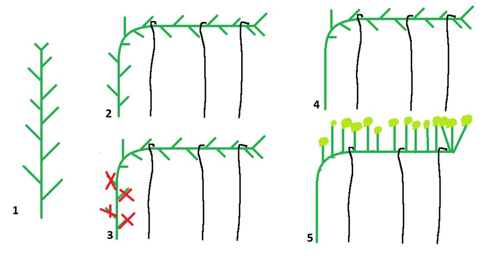plant.thumb.png.5d305c168a59ff30ff85c15c9ff158ea.png
