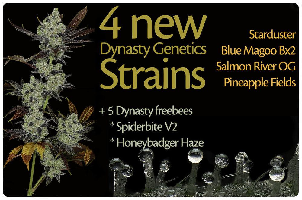 Dynasty-4newstrains-banner-home.thumb.jpg.499e7858849b909e781e7d51a71606fd.jpg